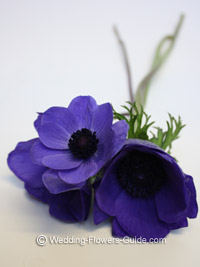 blue anemone flowers - ideal for a wedding bouquet