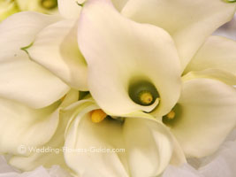 close up of white calla lily wedding flowers