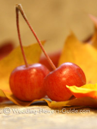 crab apples for a fall wedding