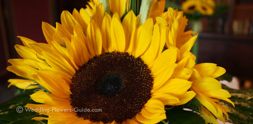closeup of sunflowers from a real wedding