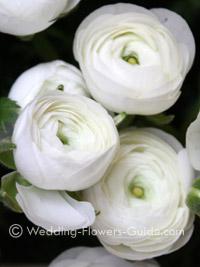 Stunning winter wedding flowers mightylinksfo